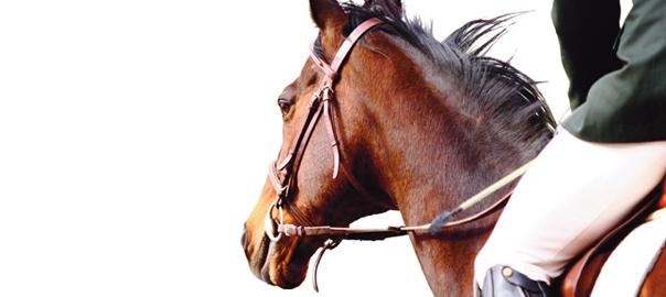 Equestrian Sports Massage